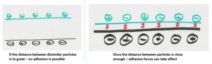 Adhesion explained