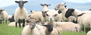 Sheep Conf & Farm Walk 22nd May Tipperary