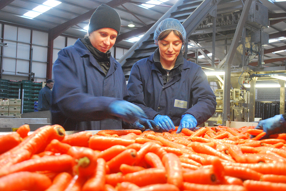 Keeping a close eye on our carrots as they go through the production line