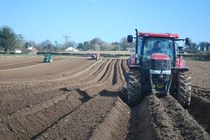 Carrot Planting April 2016