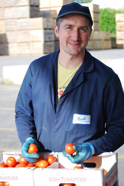George looks over some Irish tomatoes as they are delivered from our grower.