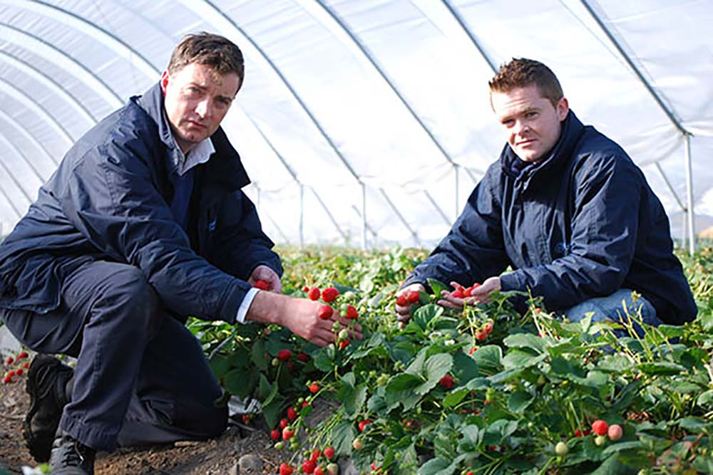 Rodney and Daniel checking on the strawberries
