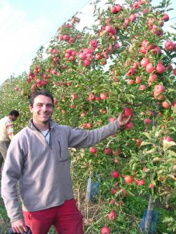 One of our Pink Lady apple growers proudly displaying the latest crop.