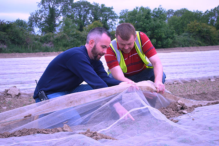 Mark M. and Mark R.checking the turnip crops under the netting