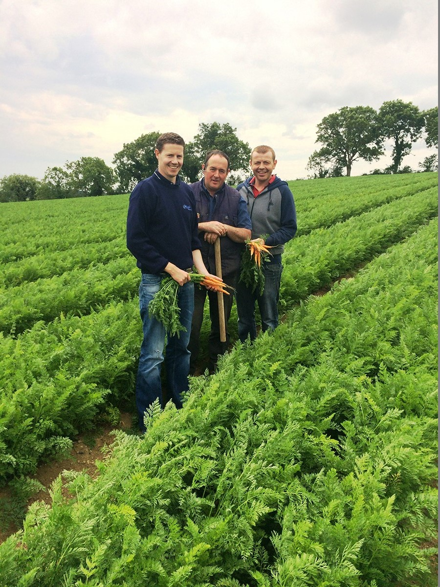 Roy and Mark visit our carrot grower Paddy right before harvest time