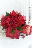 Poinsettia Gift Bag with Chocolates