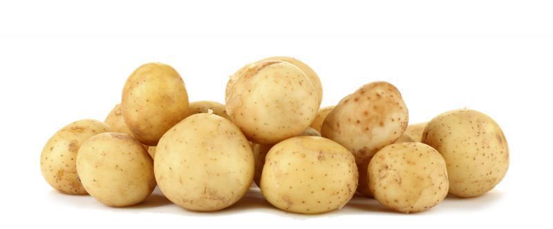 1st Early Potato: Premiere