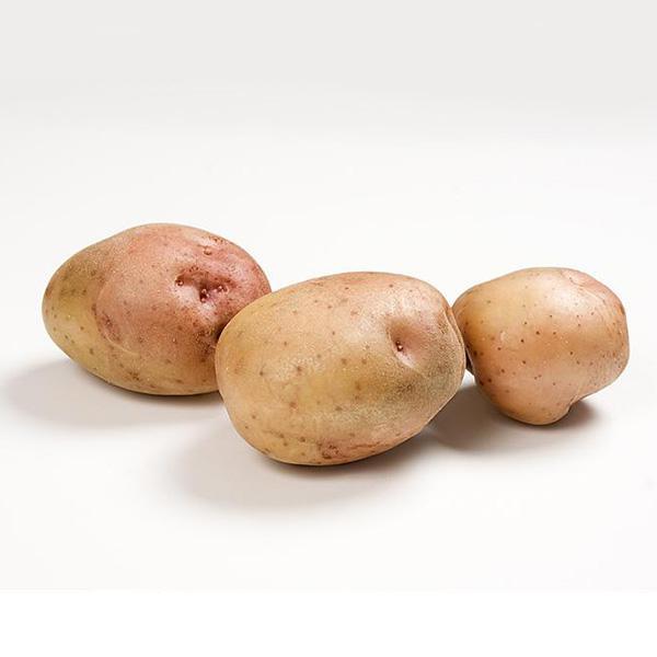 Main Crop Potato: Kerrs Pinks