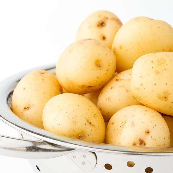 Main Crop Potato: Maris Piper