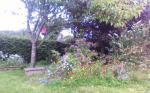 OUR WILD FLOWER GARDEN