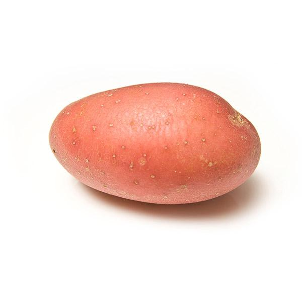 Main Crop Potatoes: Roosters
