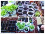 latest seedlings pics