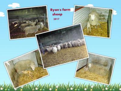 Ryan's farm 2017