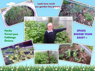 Healthy school produce garden